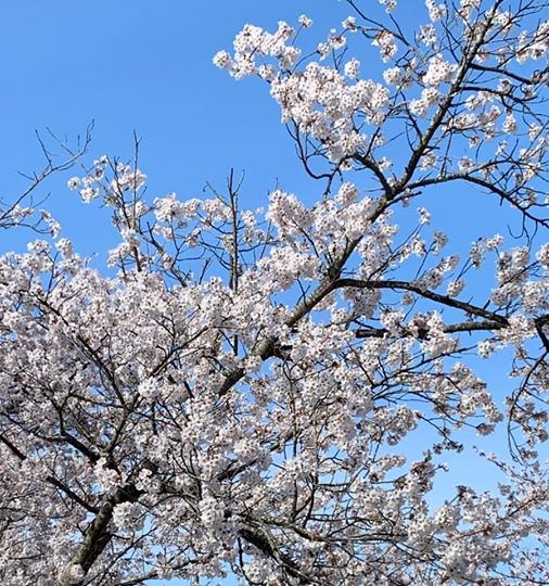 画像に含まれている可能性があるもの:木、植物、空、花、屋外、自然