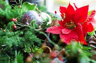 画像に含まれている可能性があるもの:植物、花、自然、屋外
