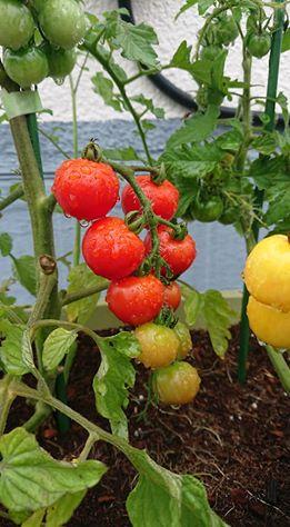 画像に含まれている可能性があるもの:植物、フルーツ、屋外、食べ物、自然