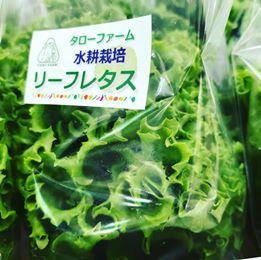 画像に含まれている可能性があるもの:植物、食べ物